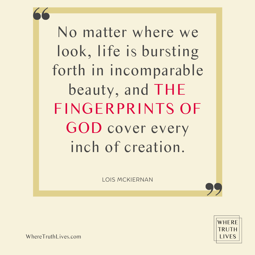 No matter where we look, life is bursting forth in incomparable beauty, and the fingerprints of God cover every inch of creation. - Lois McKiernan quote